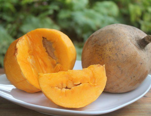 Caribbean Apricot